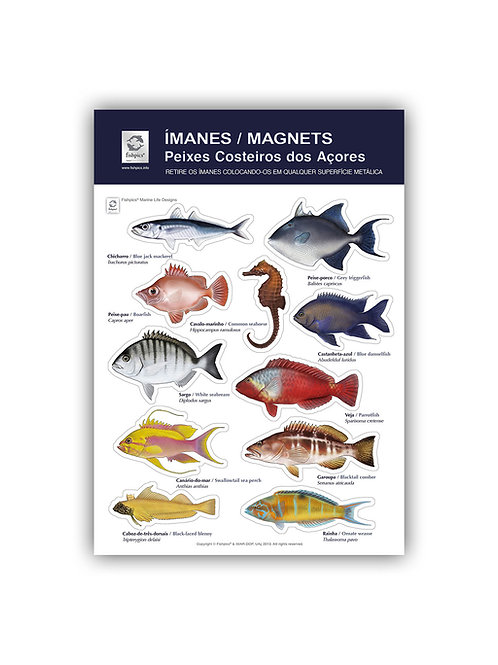 Coastal Fish of the Azores Magnets