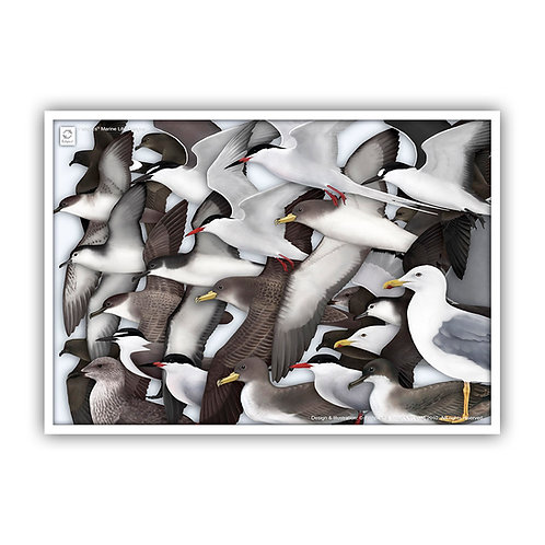 Seabirds of the Azores (composition) Poster