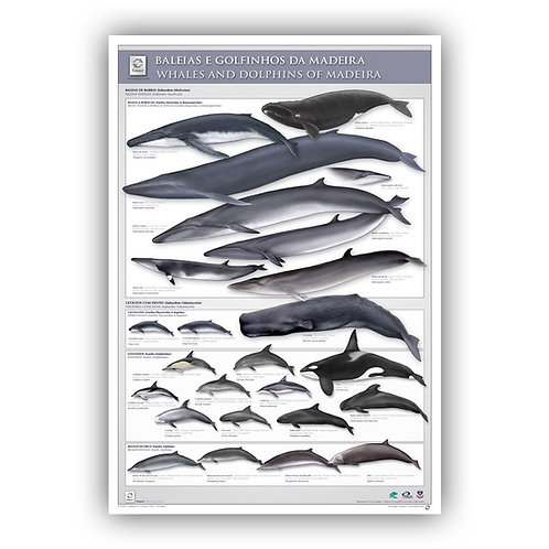 Cetaceans of Madeira Poster