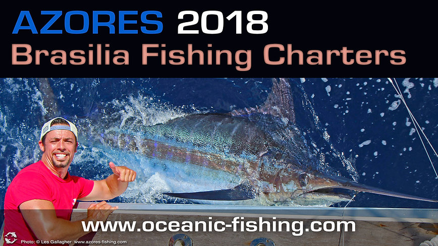 blue marlin fishing Horta - Azores