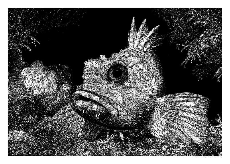 rockfishW.jpg