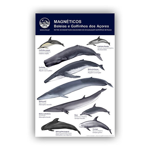 Cetaceans of the Azores Magnets