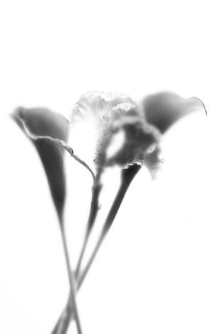 Blume 009.jpg