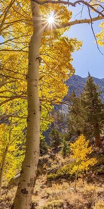 Fall Colors Sun Star, Bishop Creek Canyon