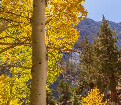 Fall Colors Sun Star, HF51.jpg
