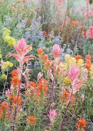 Buttermilk Wildflowers