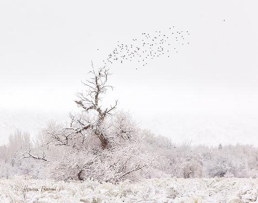 Frosty Morning Flight