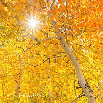 Fall Colors Gradient