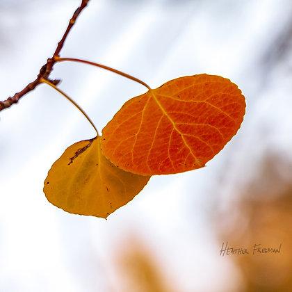 A Glowing Fall Duo