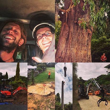 #treework #arborist #sherwoodforestry #treesergeon #nz  #sherwoodforestrytreeworks