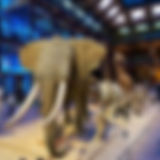260px-MNHN_grande_galerie_de_l'Évolution