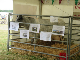 Albions at the Cheshire Show