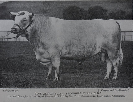 An Albion bull from the past.