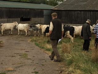Albion Cattle Society Open Day : held on Friday 10th August.