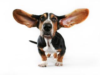 Las orejas y sus cuidados