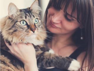 Beneficios de vivir con un gato