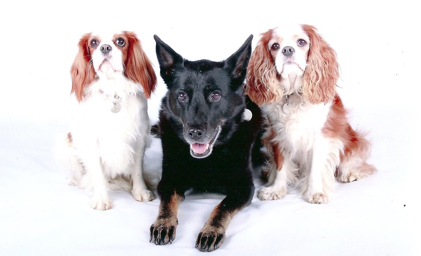 Susies dogs.jpg