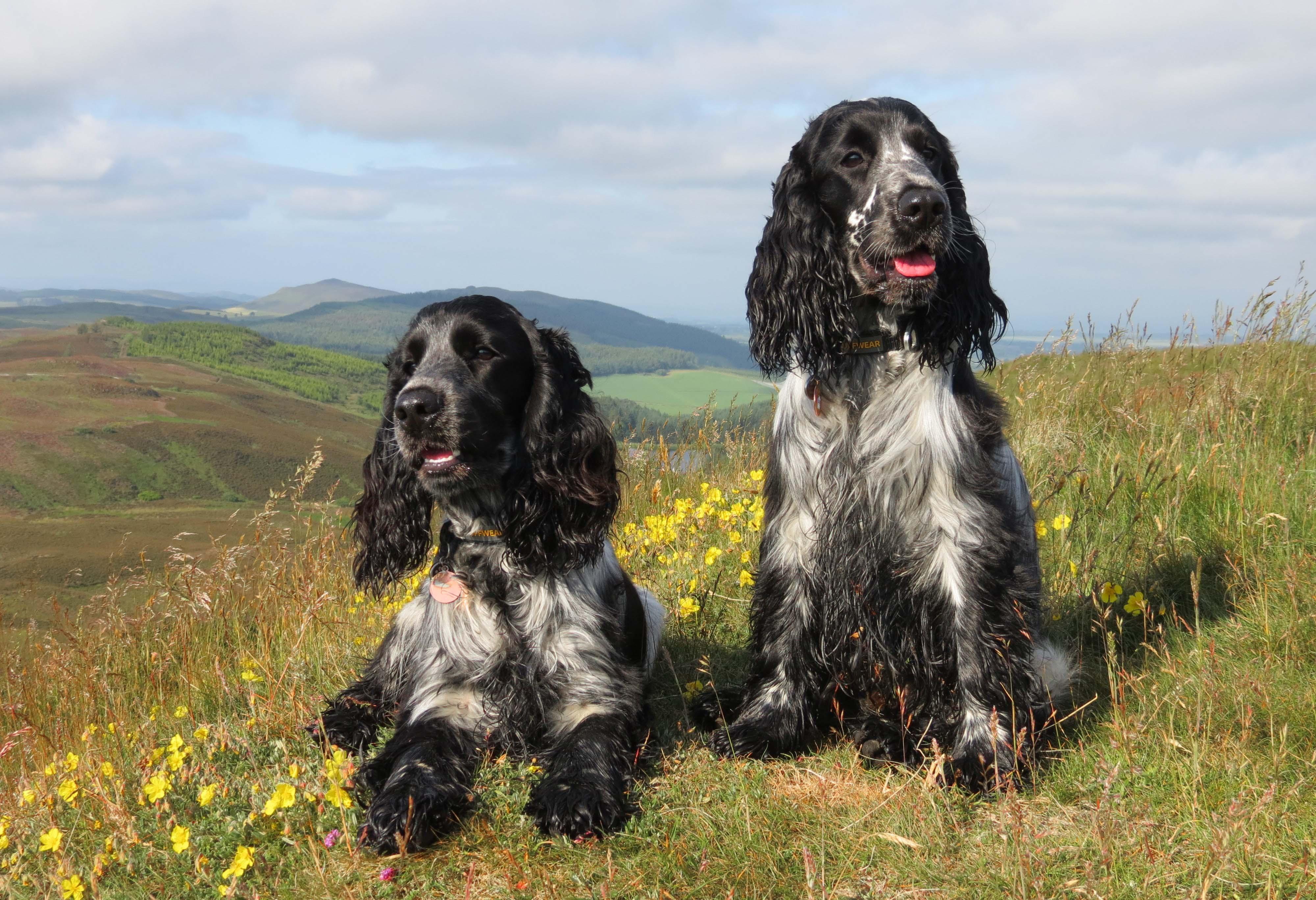 jake and elwood at lundie crags.jpg