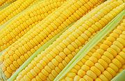 Sweet corn ears background.jpg