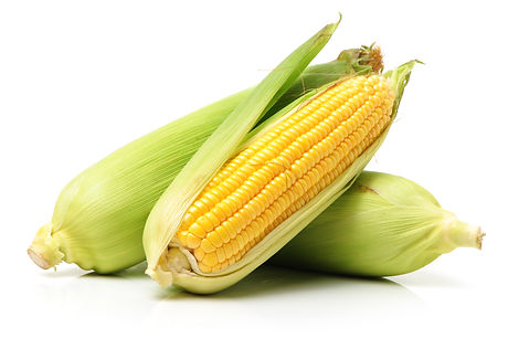 Corn on white background .jpg