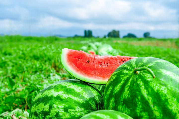 Watermelons on the melon field.jpg