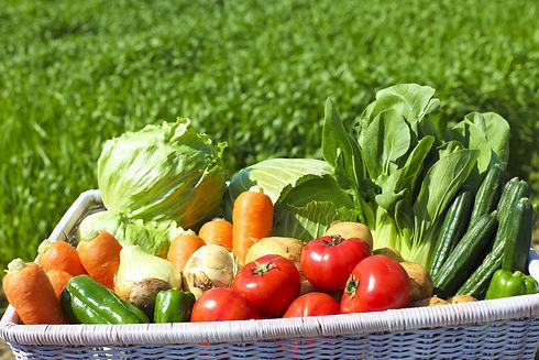 Harvest of vegetables.jpg