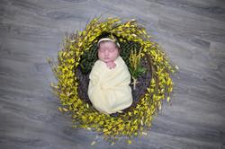 Farah's Newborn-22