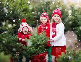 treefarm7b.jpg