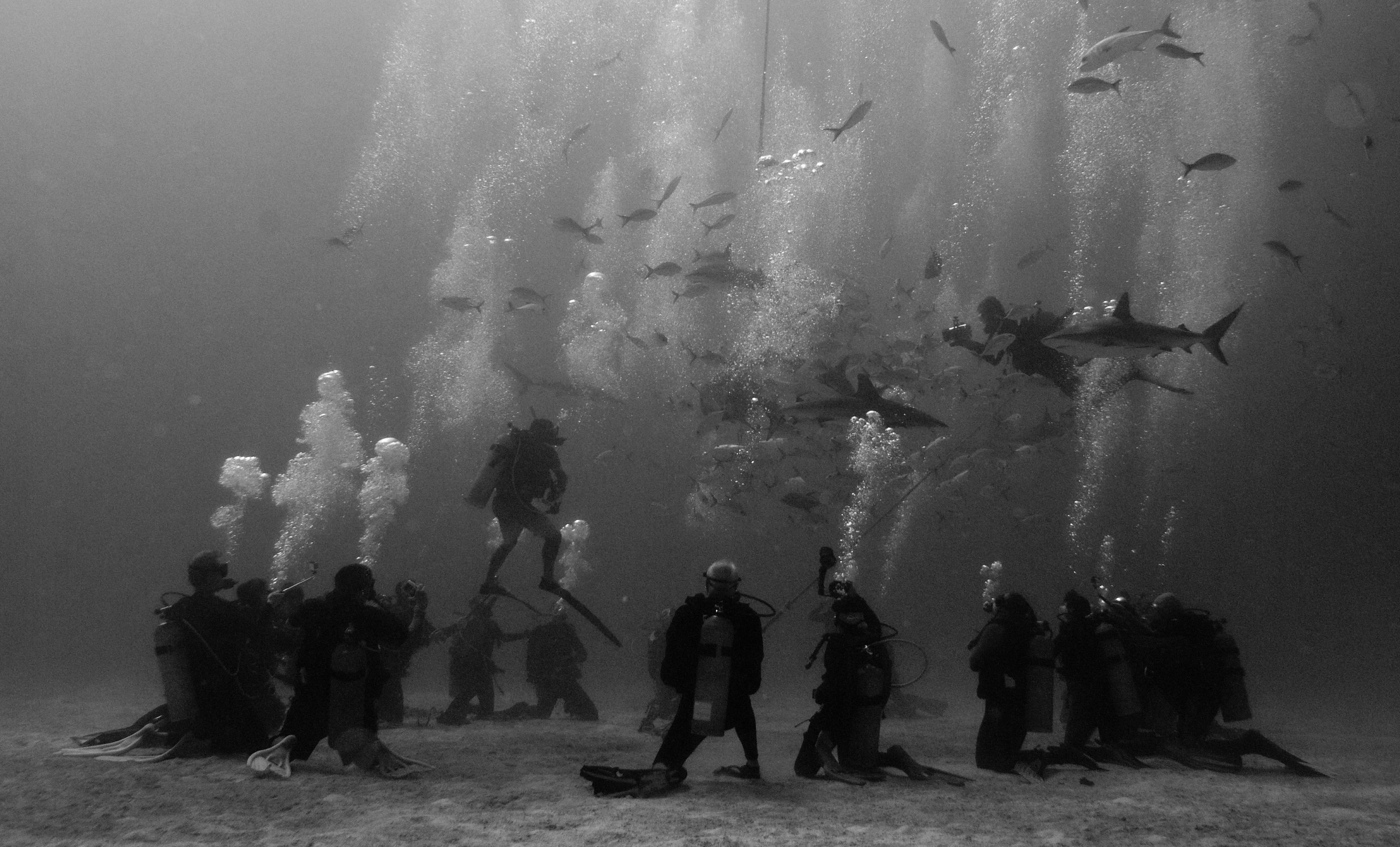 Shark Feed