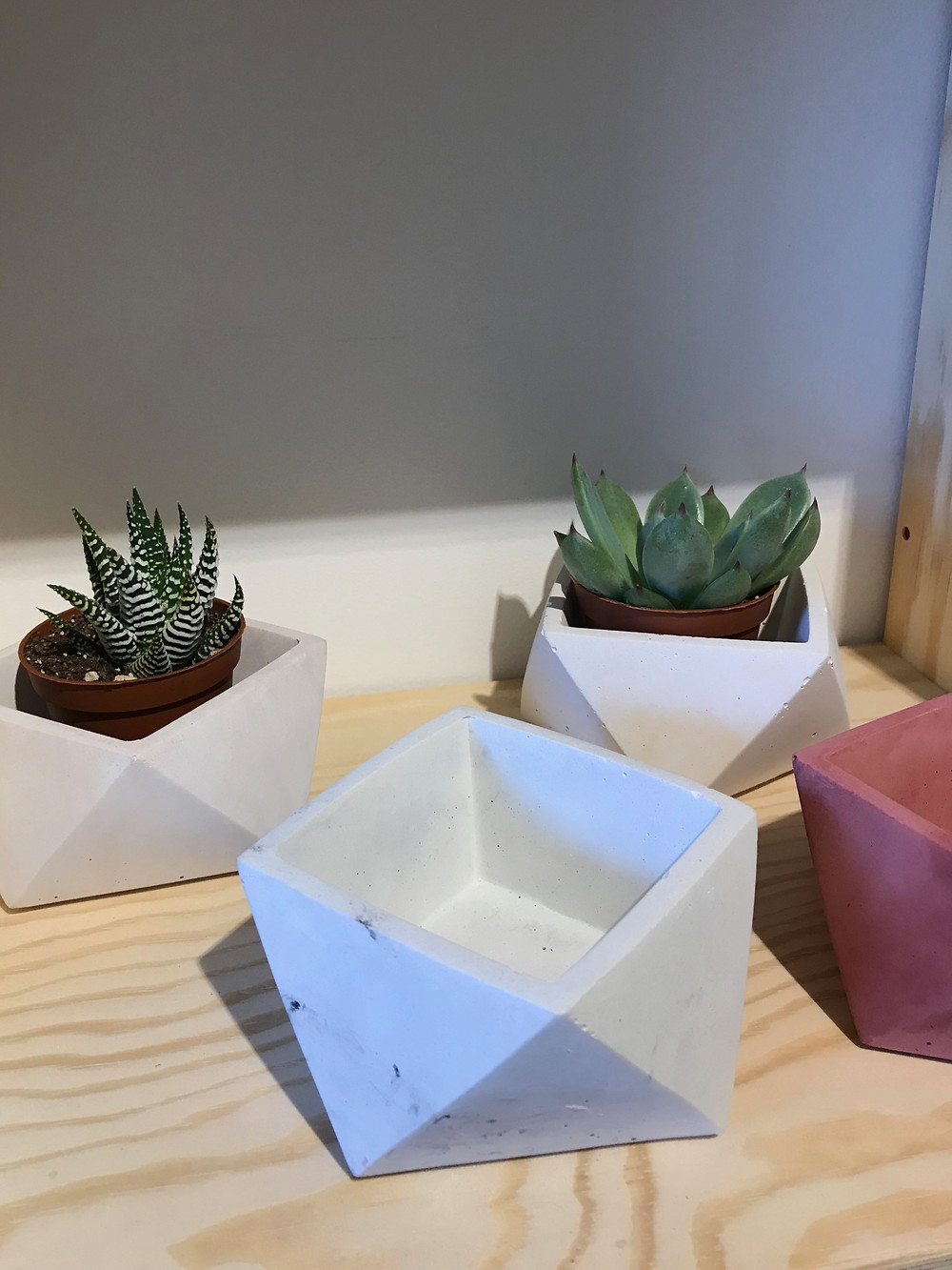 Succulents in concrete planters at Jomo Studio