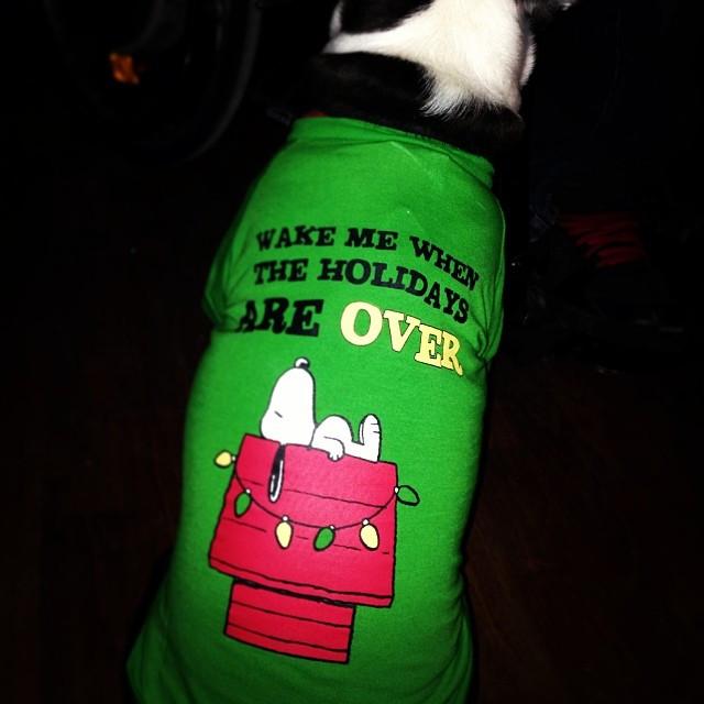 Bandito wearing his Snoopy Christmas t-shirt
