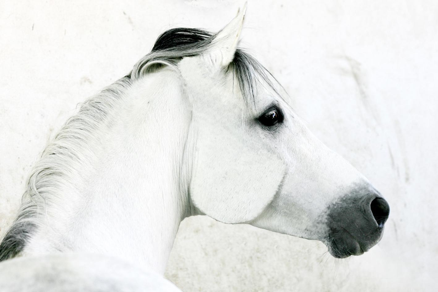 Le regard du cheval