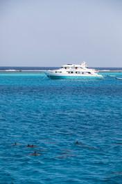Dauphins tout près du bateau