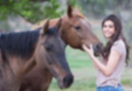 horses-1996285_1920.jpg
