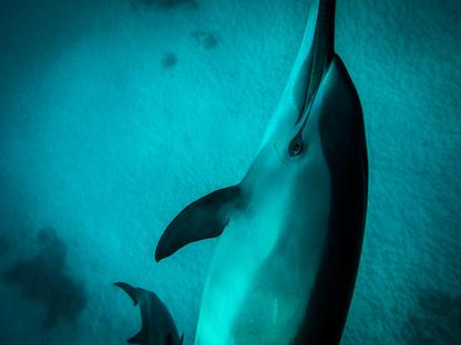L'oeil du dauphin
