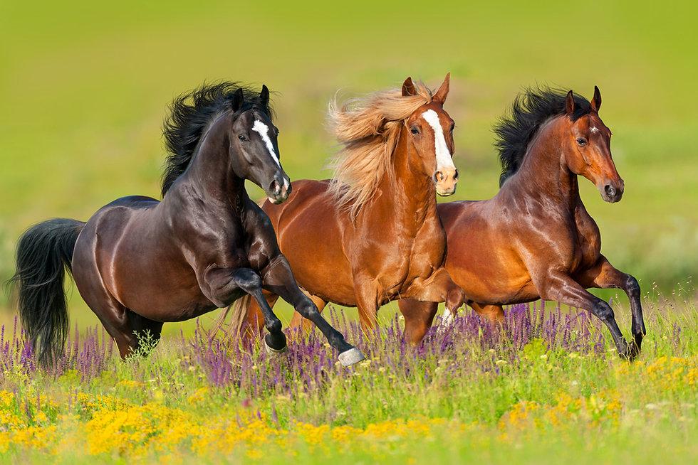 Equilab Horse Coaching Delphine Dépy Carron