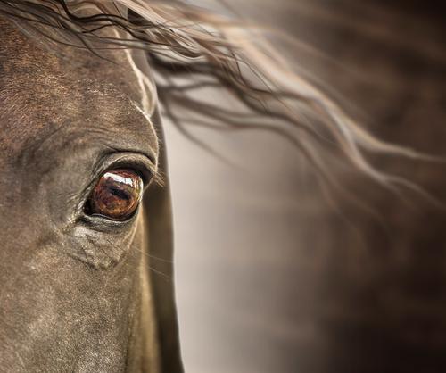 regard de cheval