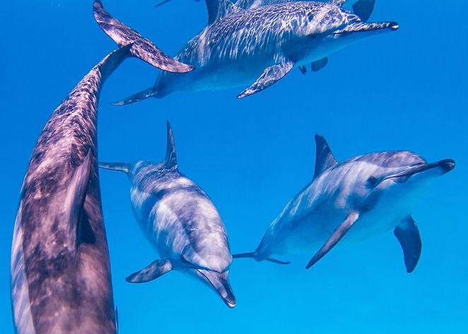 Dolphin Coaching Delphine Dépy Carron Yann Sonneck