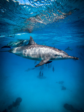Approcher les dauphins