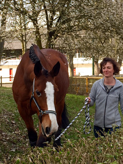Coaching facilité par le cheval EquiLab Delphine Dépy Carron