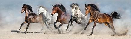 Coaching facilité par le cheval Delphine Dépy Carron