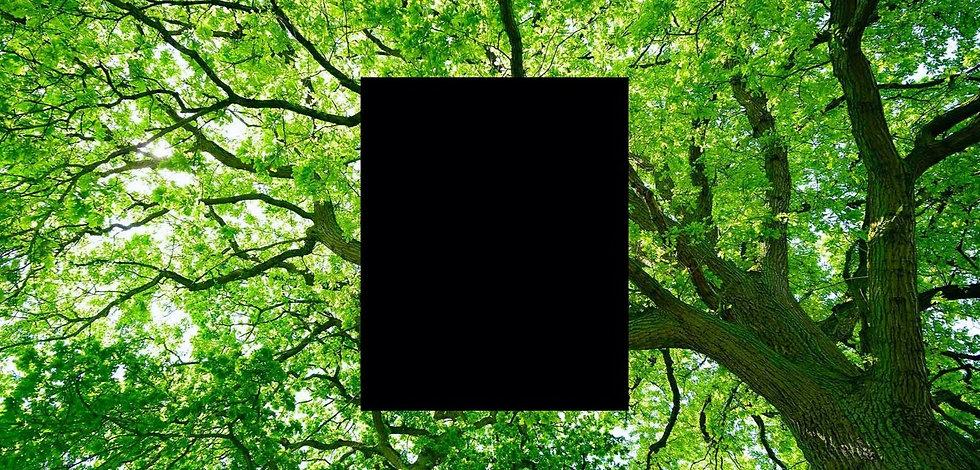 featuredimage-oakTrees_edited_edited_edited.jpg