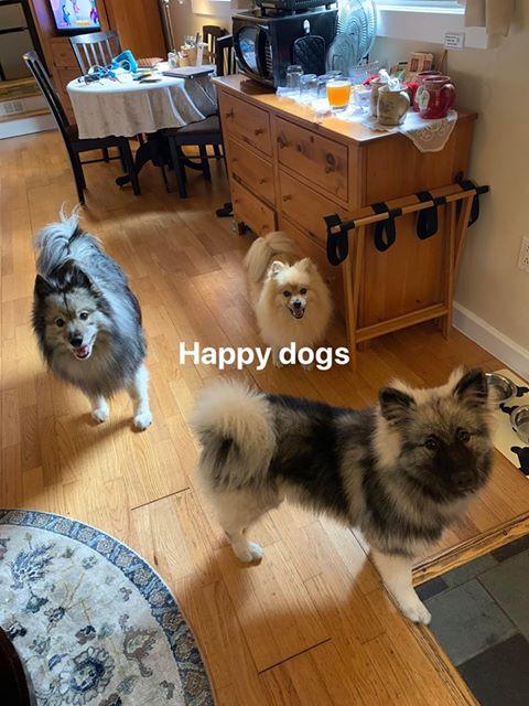 Happy dogs at Shaker Mill Inn