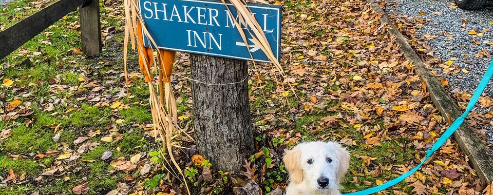 Our furry friend at the pet friendly Shaker Mill Inn
