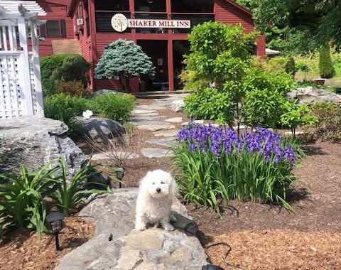 Lola at the Shaker Mill Inn
