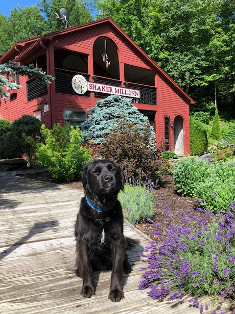 Fitzy at the Shaker Mill Inn