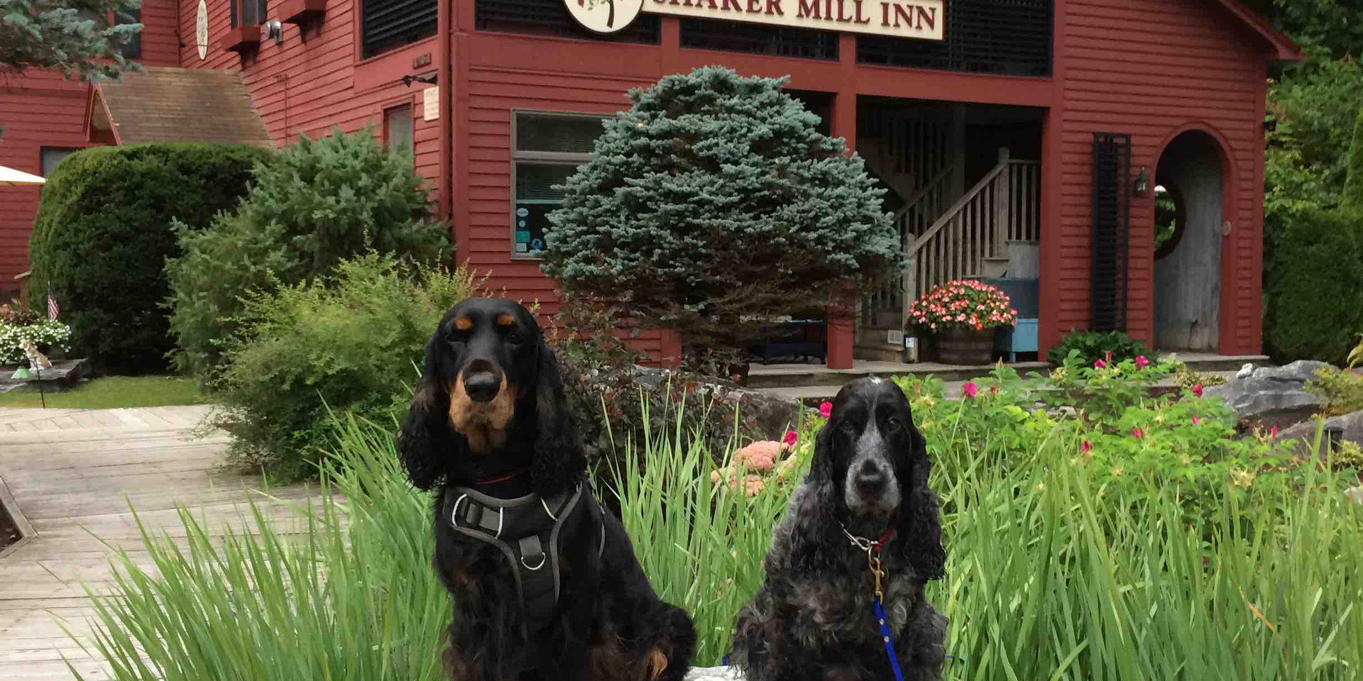 Dogs Outside of Shaker Mill Inn