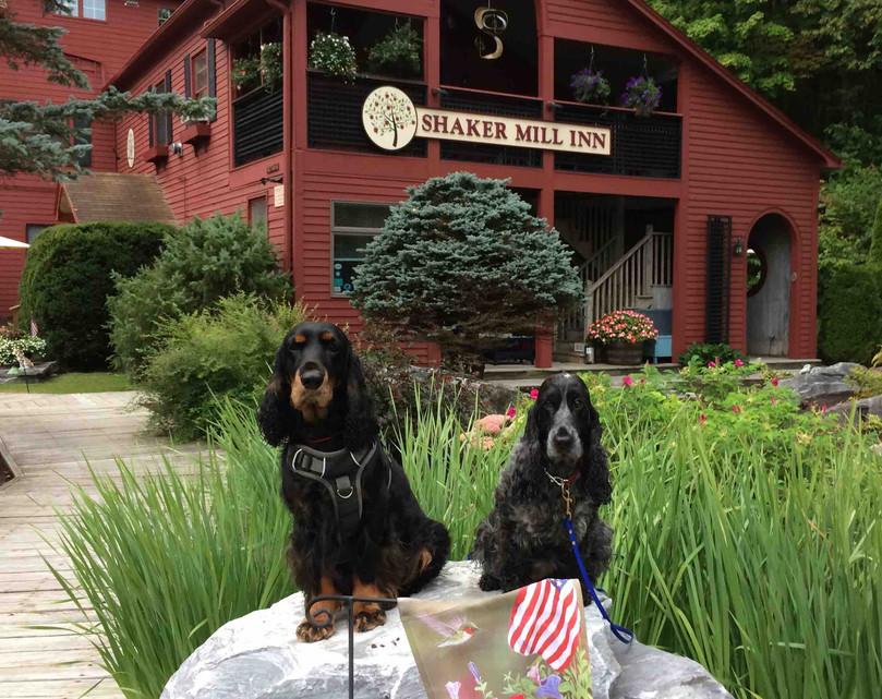 Dogs Outside of Shaker Mill Inn