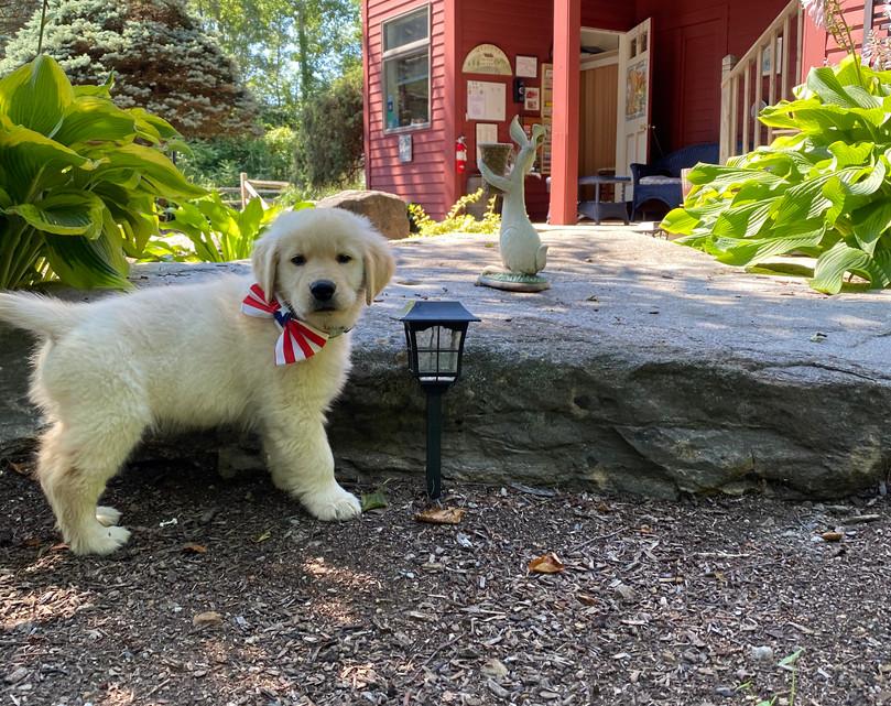 Rudy at Shaker Mill Inn