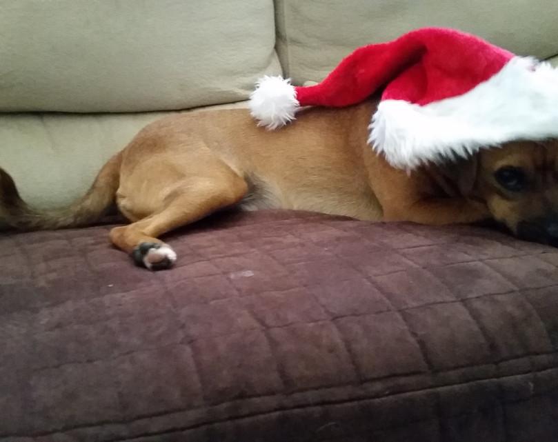 Christmas Charlie at the Shaker Mill Inn